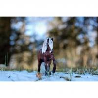 PicsArt_11-15-06.35.41.jpg