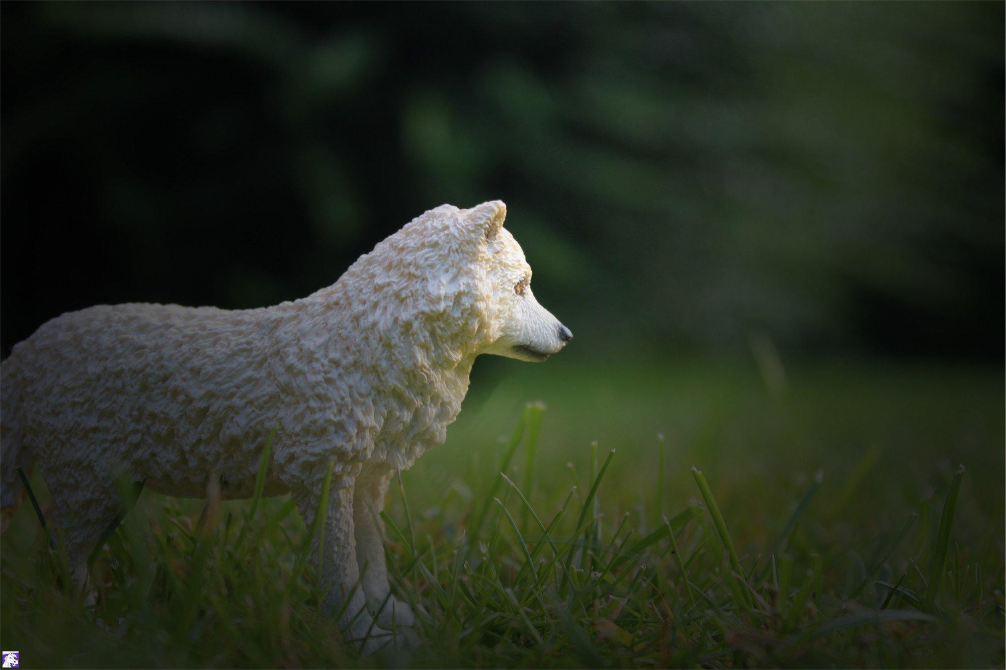 wolf_bearbeitet_i.jpg